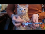 Funny Cats Play Death Metal