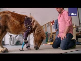 Второй шанс: врач-ортопед изготавливает протезы для животных