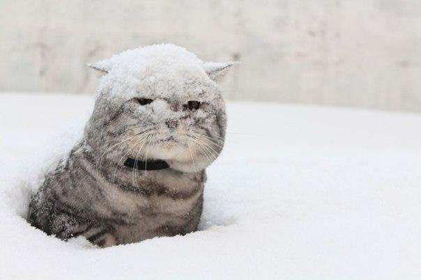 Почти весна! Чуть-чуть мешает метр снега!..ツ
