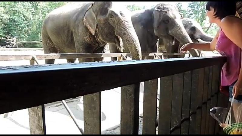 открытый зоопарк Кхоу Кхео в Паттайе