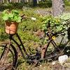 Веловыходные в Финляндии и не только
