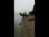 Тюмень, рыбалка, верблюд...