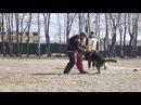 Wolferudel Imperator Большой Русский Ринг 15,04,2017