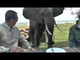 Zimbabwe Bull Elephant Crashes Into Tourists at Mana Pools