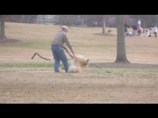 Ленивый пес прикидывается мертвым, чтобы не уходить с парка