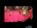 Мишка в Цирке