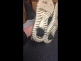 adidas Yeezy Boost 350 на колёсиках