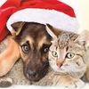 """Выставка животных """"В Новый год с новым другом!"""""""