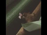 eterno_rasta video