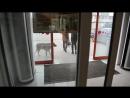 Счастье собаки всегда по ту сторону двери