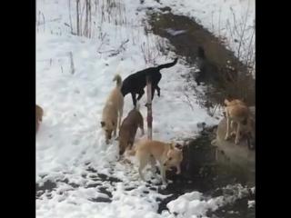 Под Волгоградом жители боятся выйти из дома из-за стаи бездомных собак