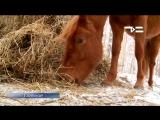 Где замерзают лошади?! Смотрим ТСН-итоги 16 января