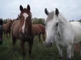 Какие-то лошадки мною заинтересовались. Наверное, я хороший