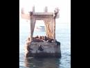 Морские львы, живущие в порту на старом причале, в 30 метрах от берега.  Насчитала 23 льва + несколько плавали.