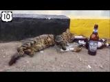 Нарезка прикольные коты