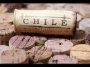 Вино. Виноделие Чили.