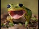 Эффект бешеной лягушки фотошоп