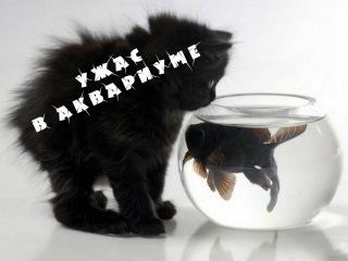 Кошмар аквариумиста! Чёрная борода!