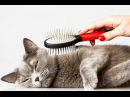 🐾 ВСЕ ПРО КОШЕК Уход за кошками – забота о здоровье.