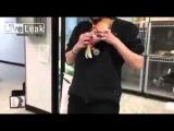 LiveLeak com Kitten wheelchair