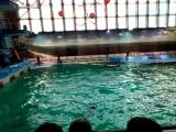На Крестовском в дельфинарии!