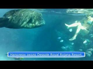 Рыба Наполеон и девушка (снорклинг) Египет 2012 Шарм-Эль-Шейх _ Пантон Dessole R