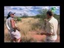 BBC Заповедник в дебрях Африки 15 серия Реальное ТВ животные 2005