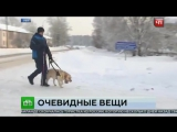 В_Уфе_слепого_заставили_купить_билет_на_автобус_для_собаки_поводыряTV_-_Новости_Рус203