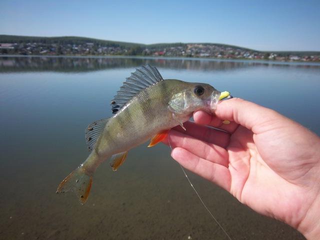Мормышинг (Mormishing) XUL Fishing 20.08.2016