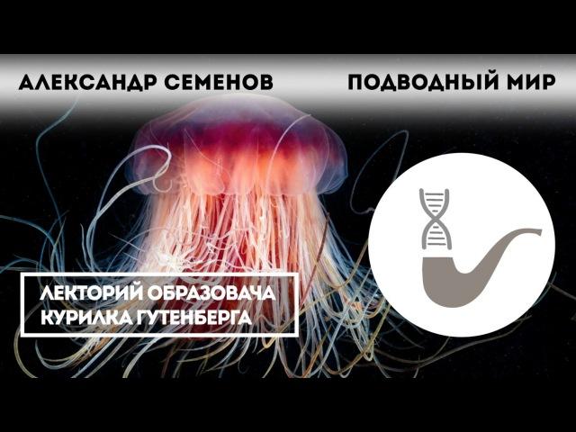 Подводный мир холодных морей • Андрей Семёнов