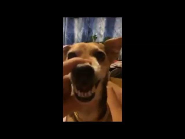 Собака сказала ляля мегаржач