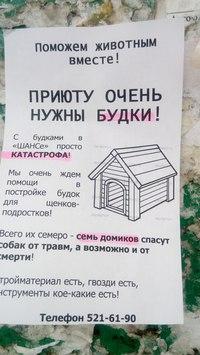 «Приюту нужны будки». Собачки из «ШАНСа» хотят иметь свой дом, фото-1
