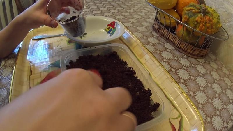 Необычный способ посева семян земляники в ГИДРОГЕЛЬ