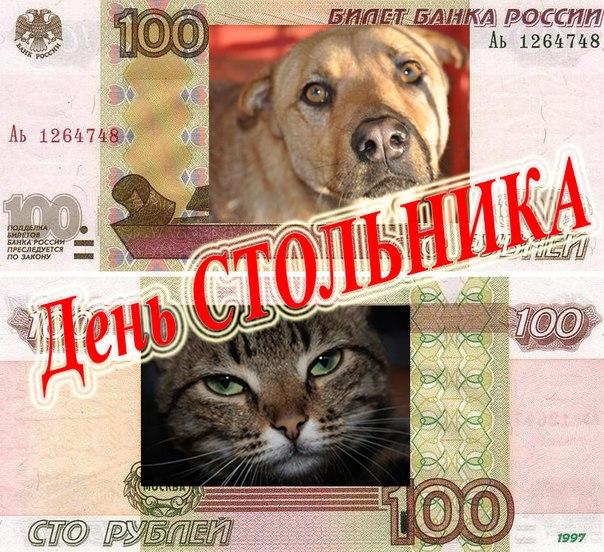 """Афиша Улан-Удэ День стольника для приюта """"Кот и пес"""""""