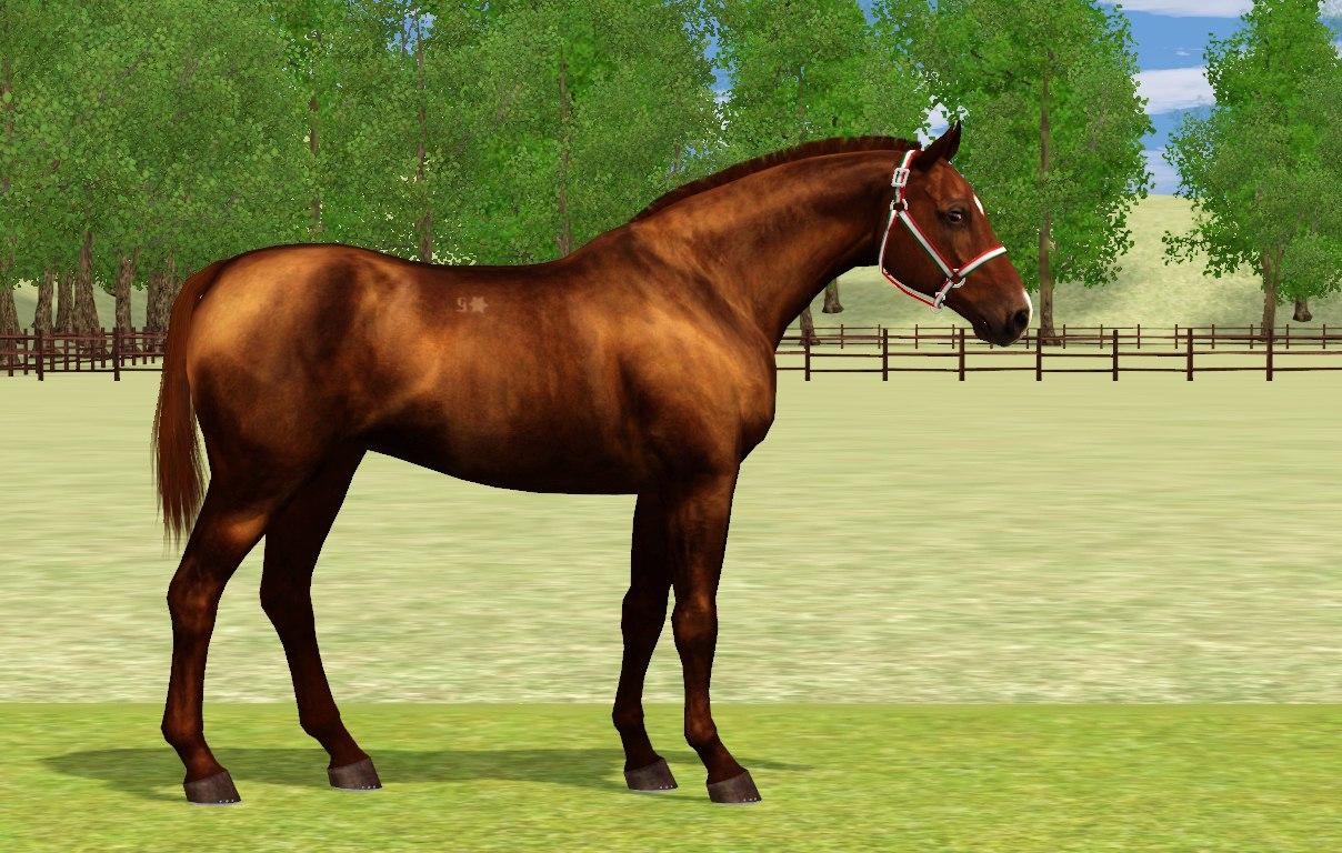 Регистрация лошадей в RHF 2 - Страница 4 QrJ2a2nZEEs