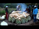 Cooking Maguey agave for Mezcal Mezcal Real Minero Oaxaca Mexico