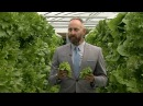 The future of farming Vertical hydroponic crops