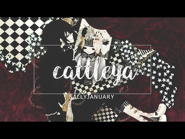 「CCB 」 Cattleya • German Fancover