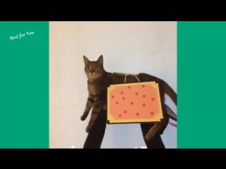 Приколы с животными #1