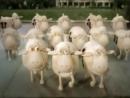 Рекламные ролики про овечек Serta Все серии