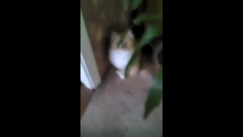 это моя кошка Рыся