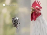Куры поют! Поющий петух! Куриный клип! Хит 2017 года! Супер