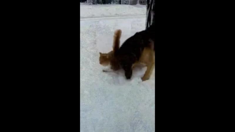 хаха голву в снек ♡♥♥♡₩