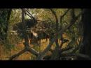 """Дикая Африка. """"Национальный Парк Серенгети"""" 2011 год."""