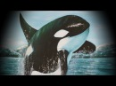 Всемирный день защиты морских млекопитающих (День кита) - 18 февраля (дата для 2017 года).