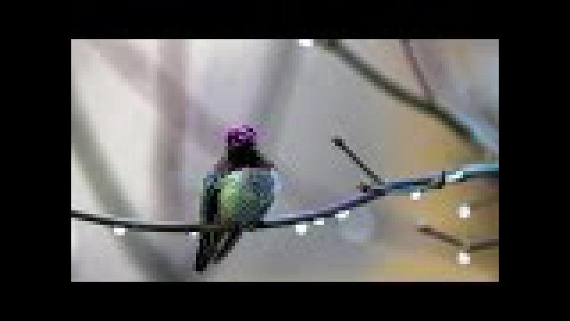 AVE MARIA by Leo Rojas - SOUL BIRD
