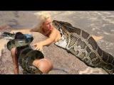 Most amazing wild animal attacks,Giant Anaconda VS Dog,Biggest Python vs Deer