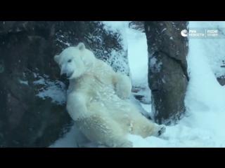 Животные радуются снегопаду в зоопарке Орегона