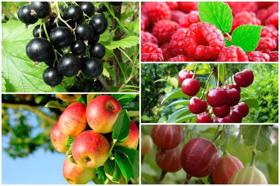 Полезная информация о плодовых деревьях и ягодных кустарниках