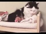 даже кошку можно приучить...